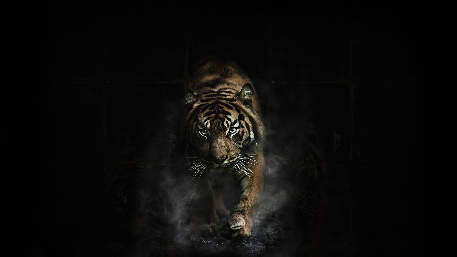 Tiger tigers wallpaper | 1920x1080 | 83195 | WallpaperUP