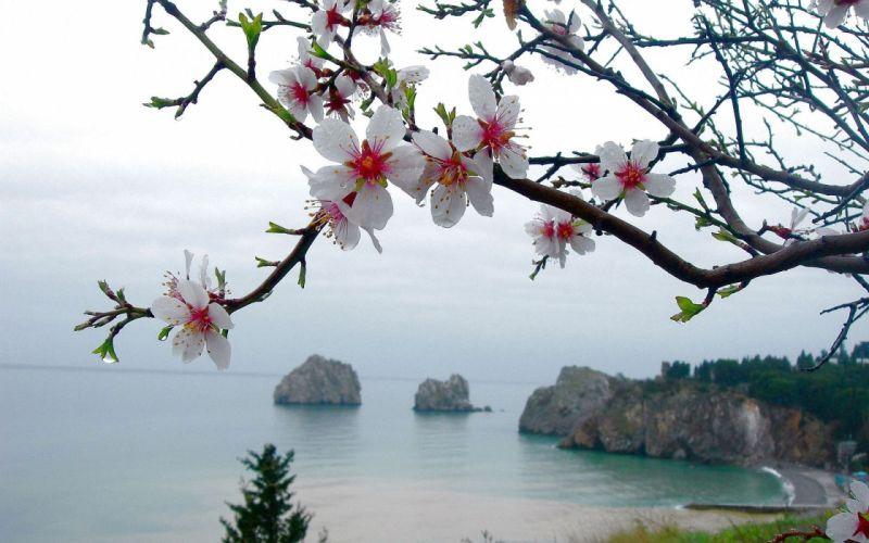 ocean sea drops flowers trees blossom blossoms wallpaper