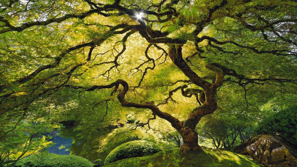 Tree Sunlight Green wallpaper