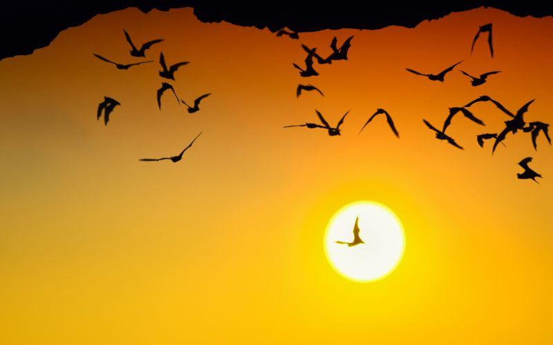 Bats Sunlight Silhouette sunset wallpaper