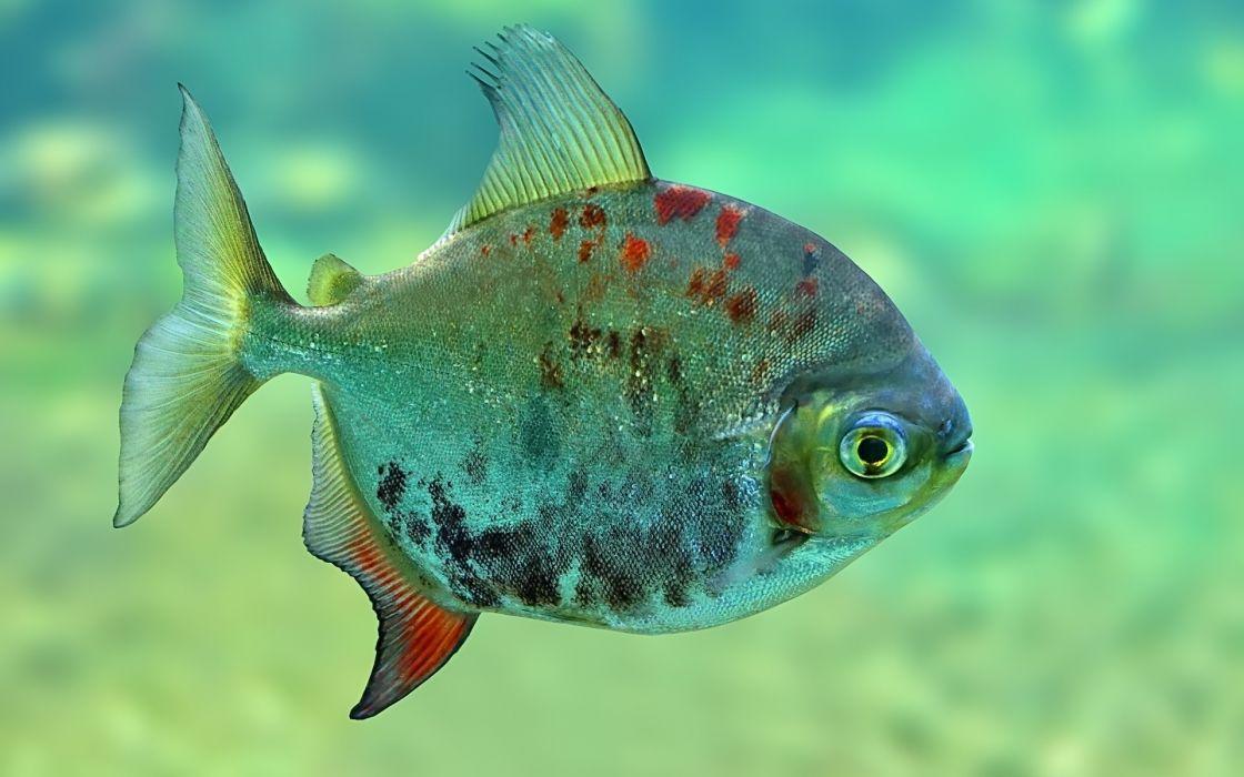 fish underwater eye eyes wallpaper