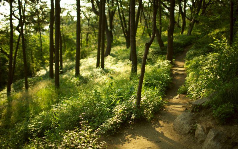 forest trees grass path blur focus wallpaper