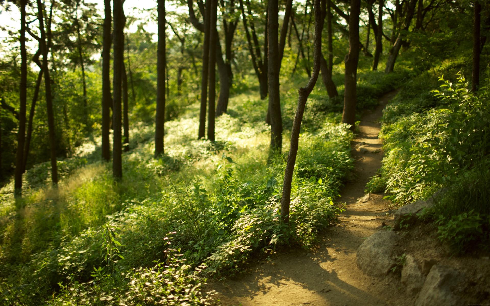 Forest trees grass path blur focus wallpaper  1920x1200  83972  WallpaperUP