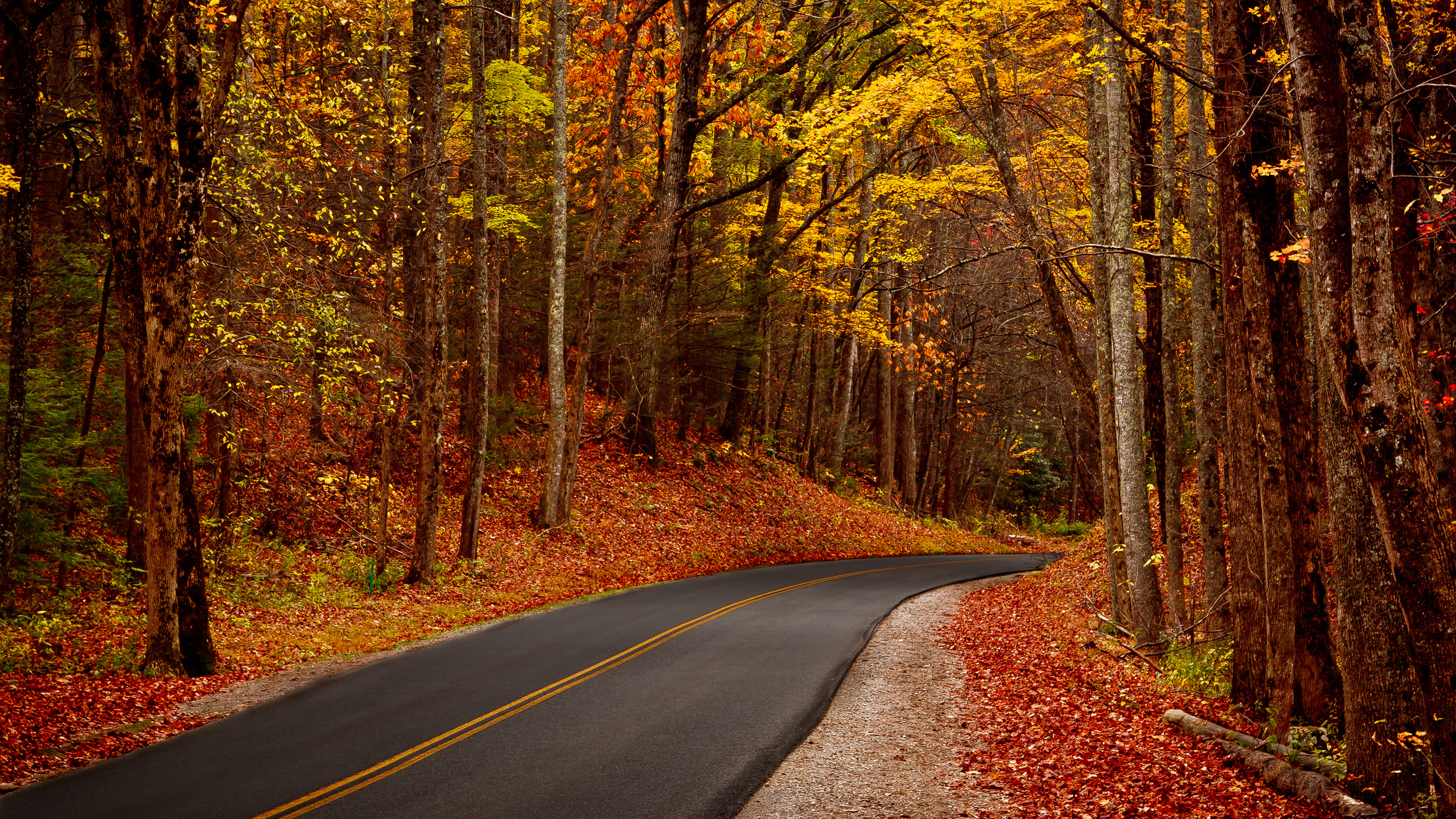 Leaves trees forest park autumn walk hdr roads wallpaper