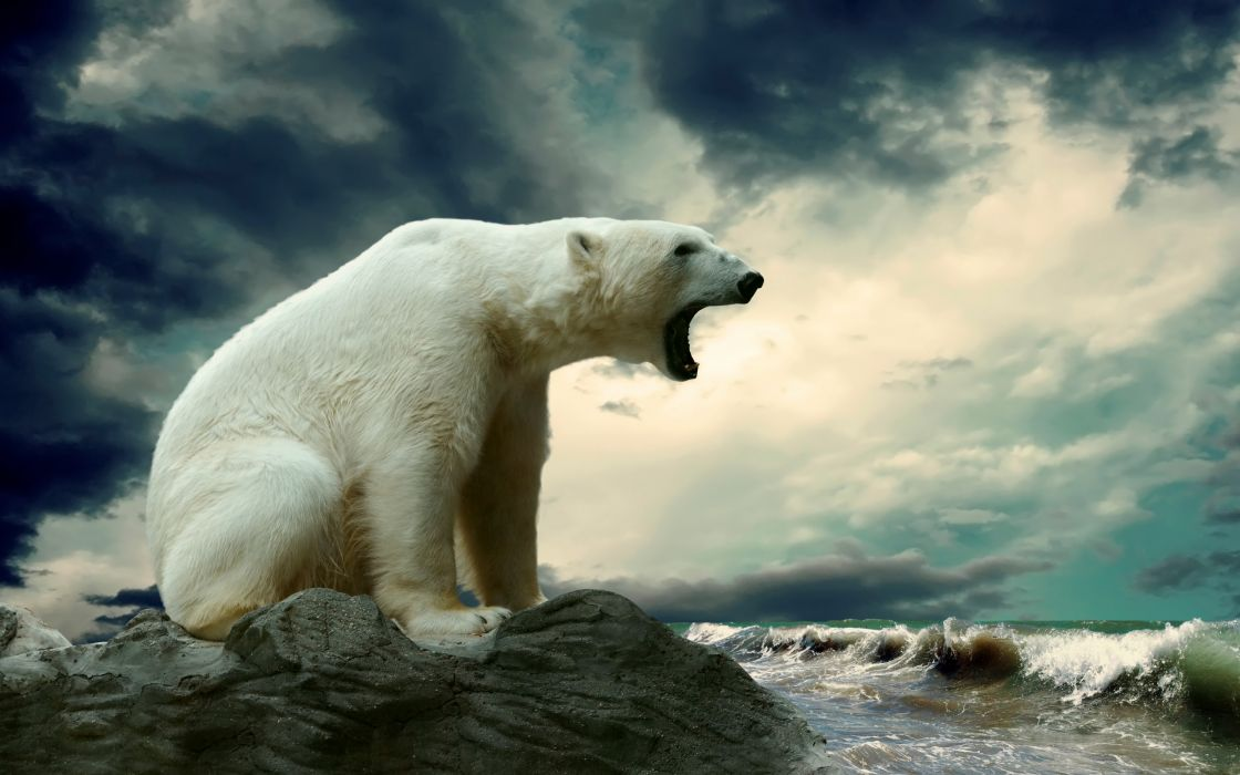 polar bear rock sea waves bears ocean wallpaper