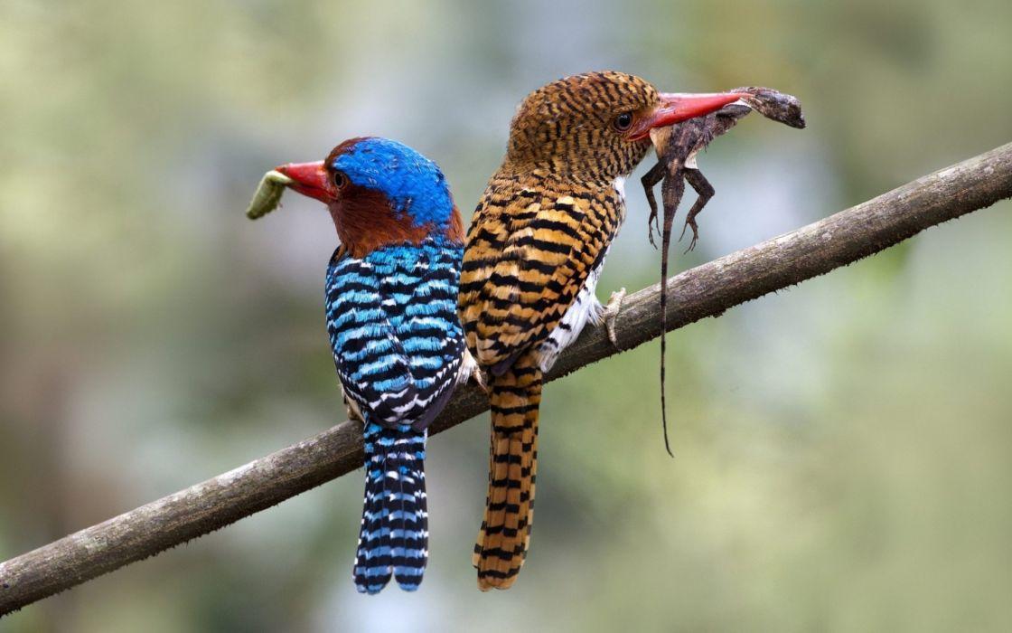 prey kingfisher branches birds Animals lizard food wallpaper