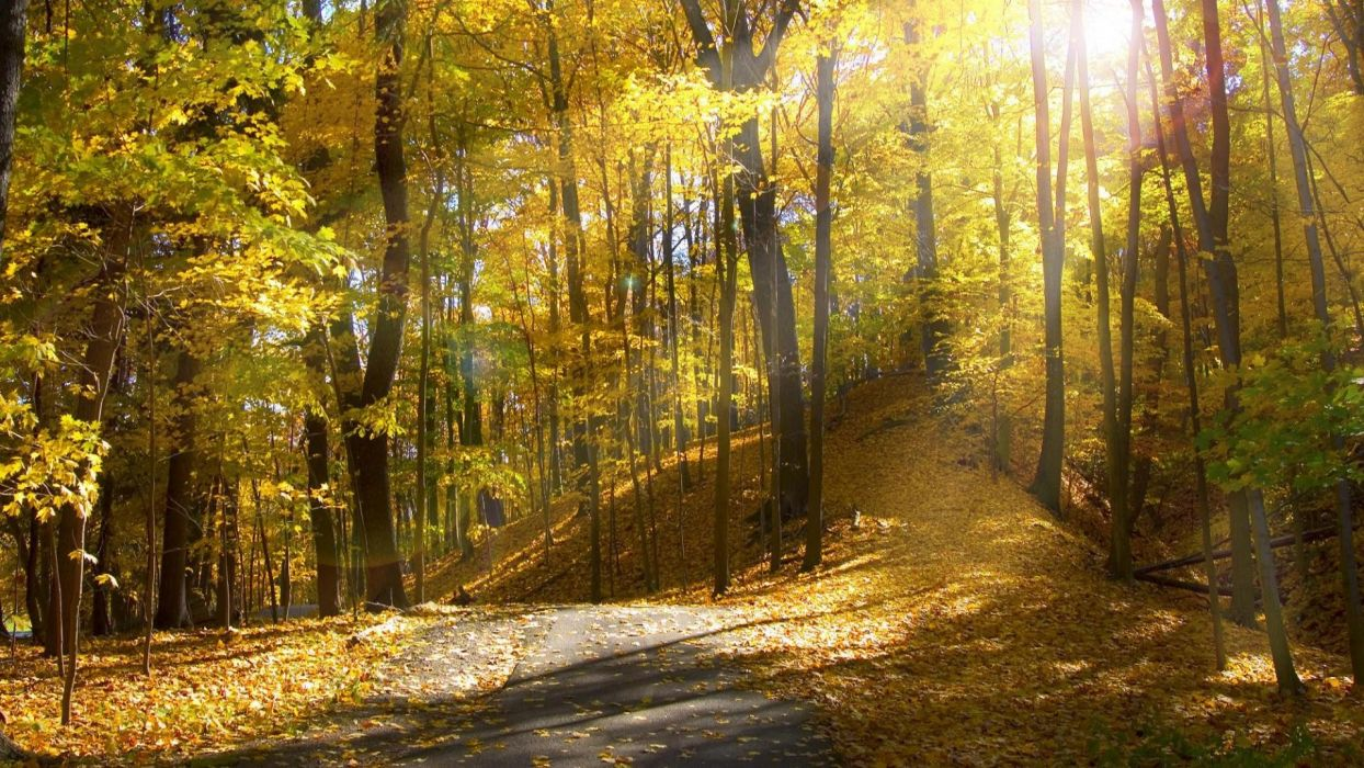 Sunlight Autumn Trees sunrise leaves leaf road roads path trail wallpaper