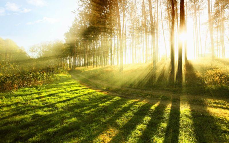 trees forest light grass sun rays sunrise sunset wallpaper