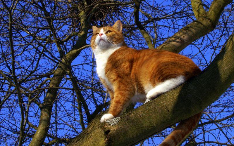 cat trees branches wallpaper
