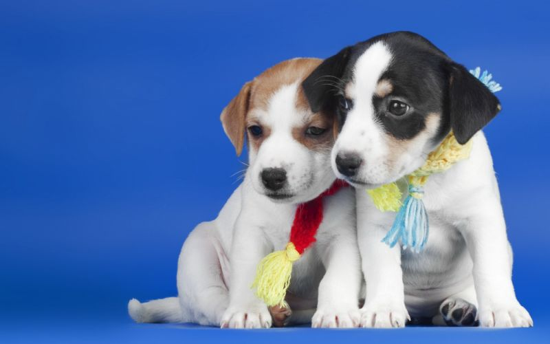 dogs puppies dog puppy wallpaper