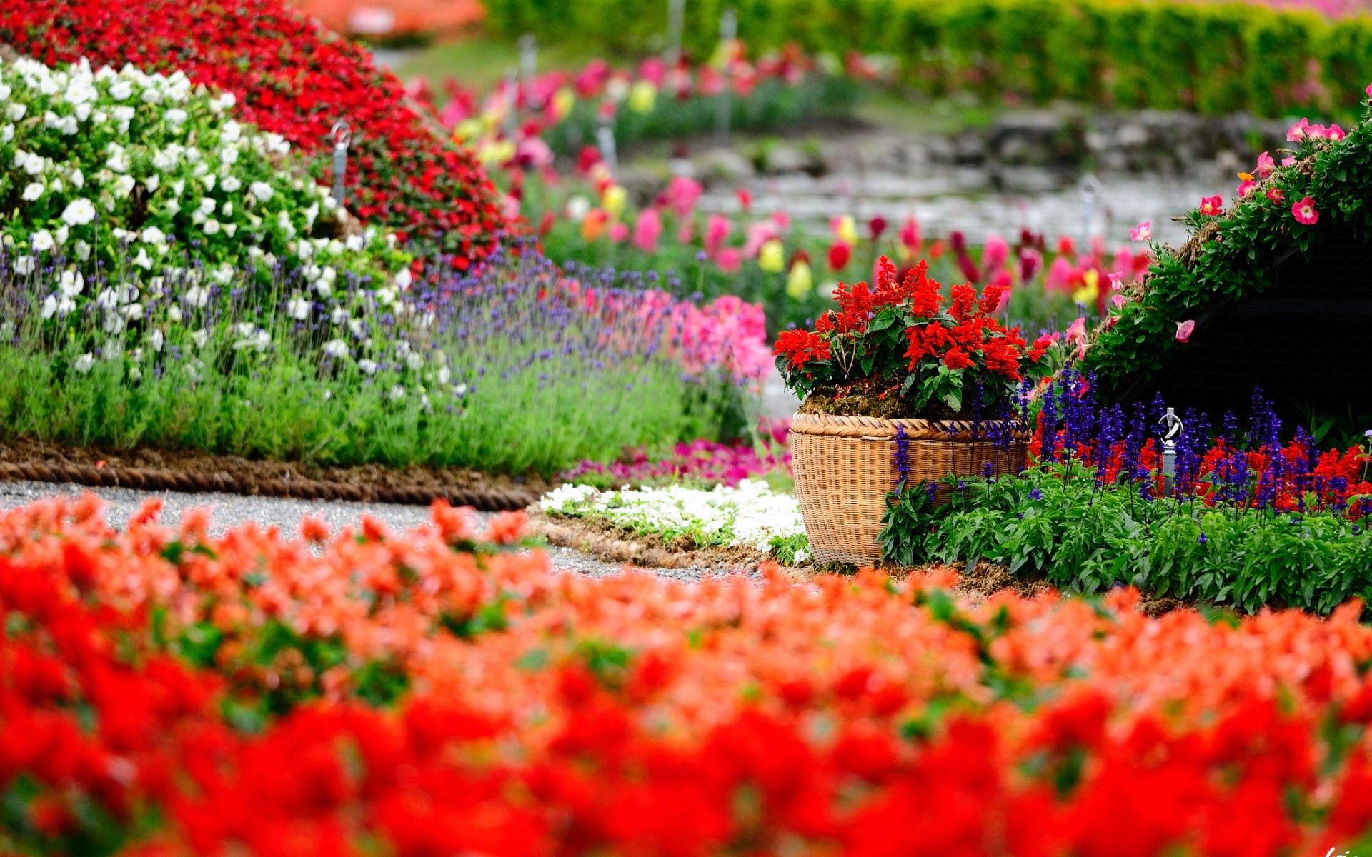 Flowers park garden color gardens macro bokeh wallpaper