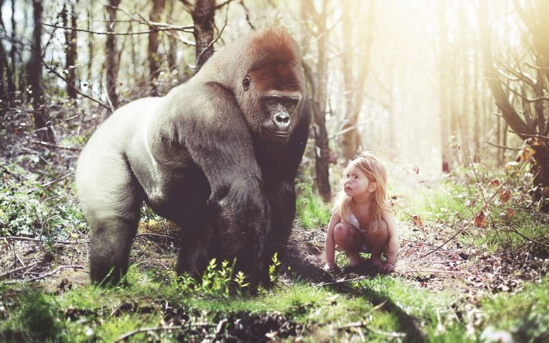 gorilla girl monkey forest situation girls humor funny cute wallpaper
