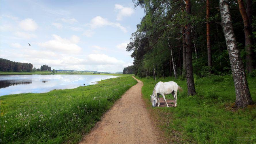 lakes pond landscape landscapes reflection horse horses animals path trail mood trees wallpaper