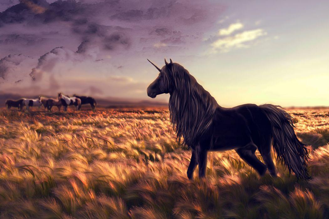 Magical animals Unicorns Fields Horses Black Fantasy Nature horse wallpaper