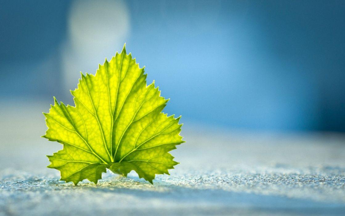 leaf nature leaves wallpaper