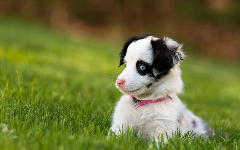 Dog Puppy Grass dogs puppies wallpaper