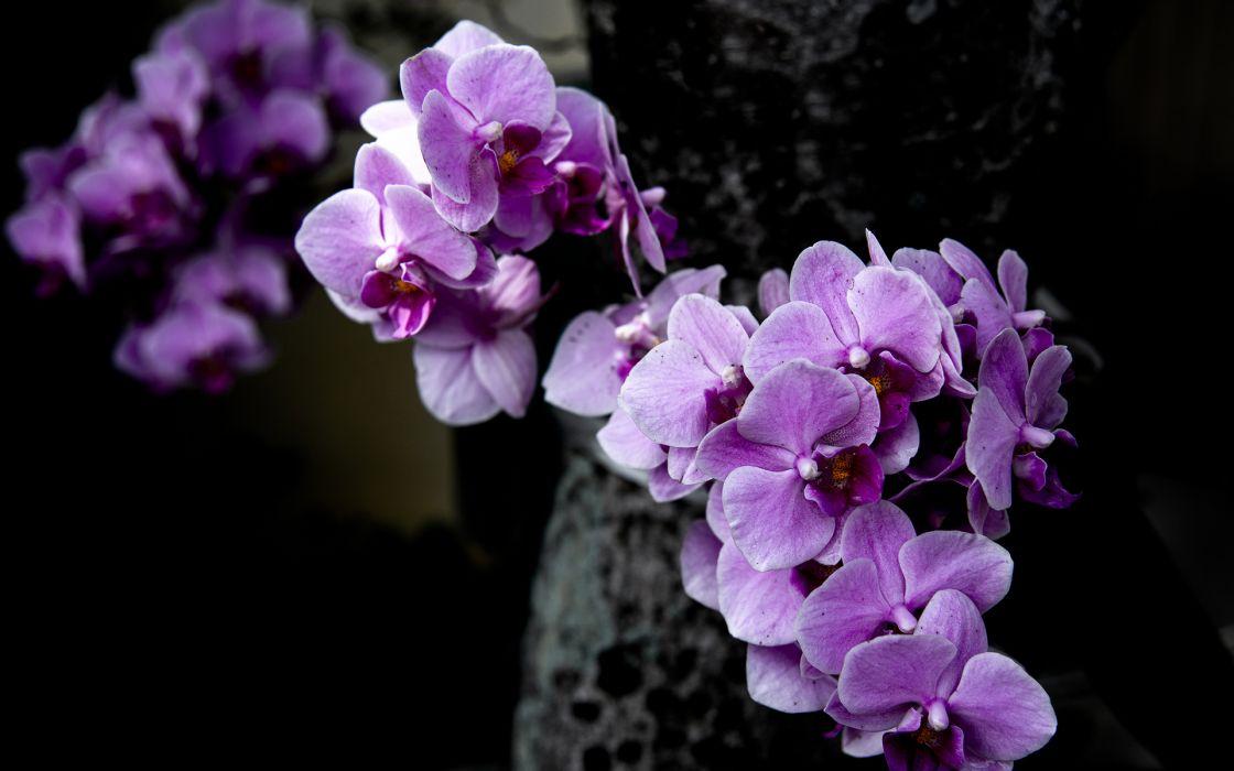 Flowers Purple blossom blossoms wallpaper