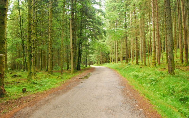 forest trees nature roads wallpaper