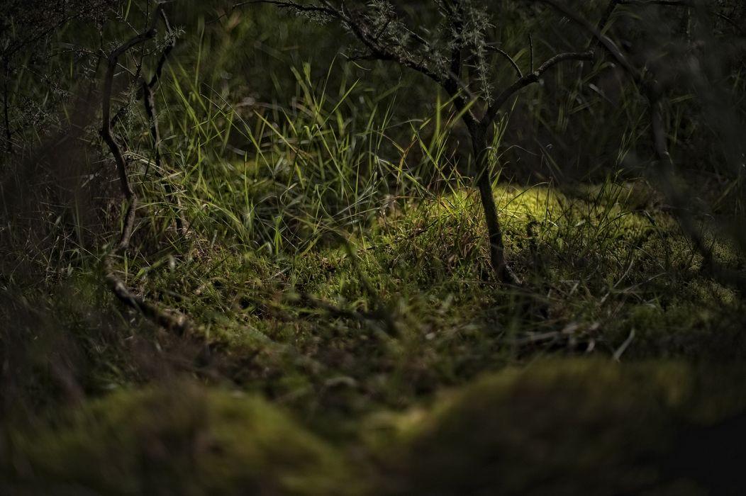 grass forest plants moss wallpaper