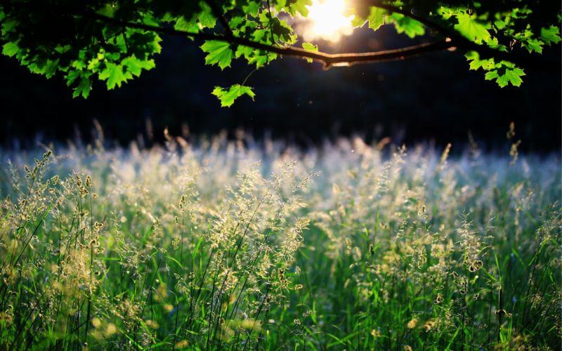 grass leaves sunlight wallpaper