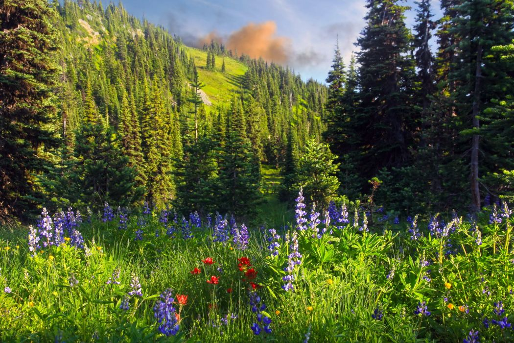 Grass Nature flowers trees forest mountains wallpaper