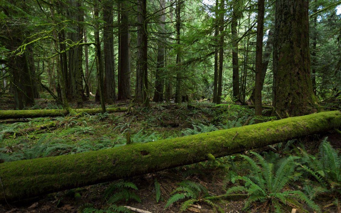 moss ferns woods trees forest wallpaper