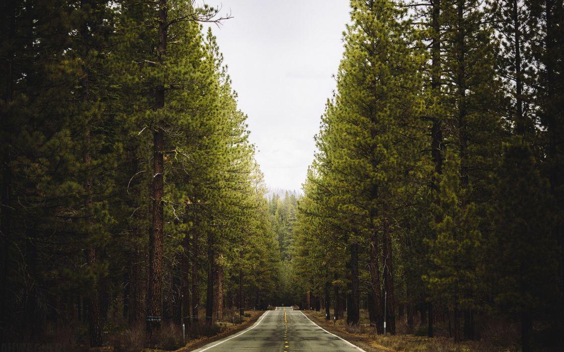 roads road landscape landscapes trees forest wallpaper