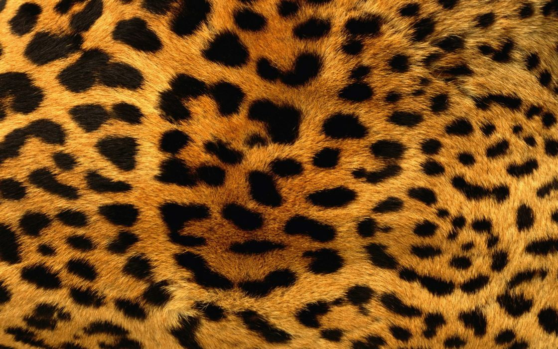 Animals Patterns Fur Leopard Print Wallpaper 40x40 40 Simple Animals With Patterns