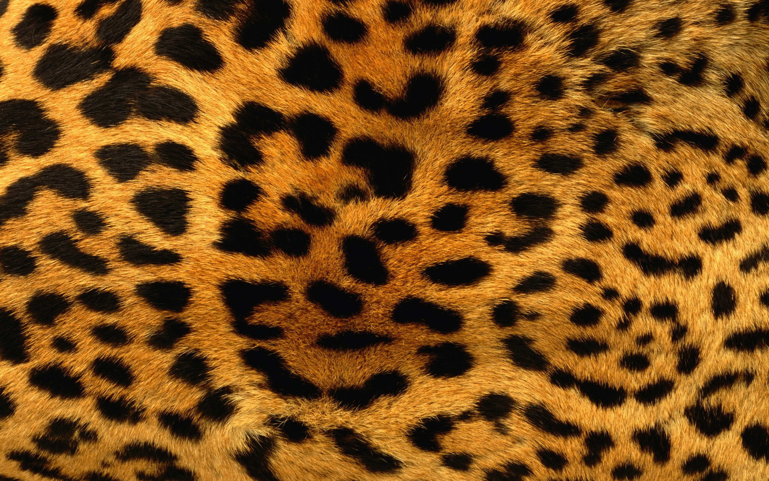 Animals patterns fur leopard print wallpaper  2560x1600  87634