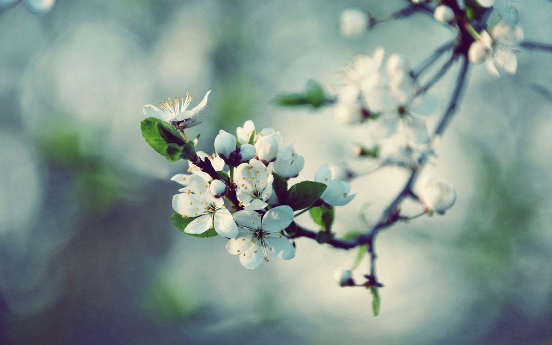 nature spring blossoms macro wallpaper