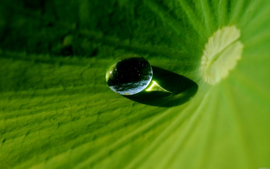nature water droplets wallpaper