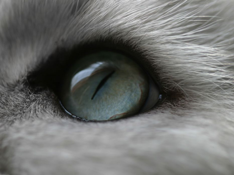 eyes cats animals macro wallpaper