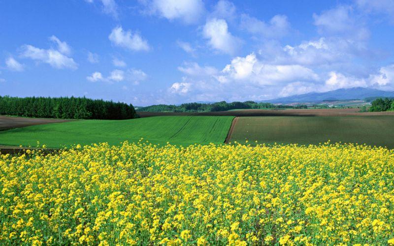 Japan landscapes nature fields wallpaper