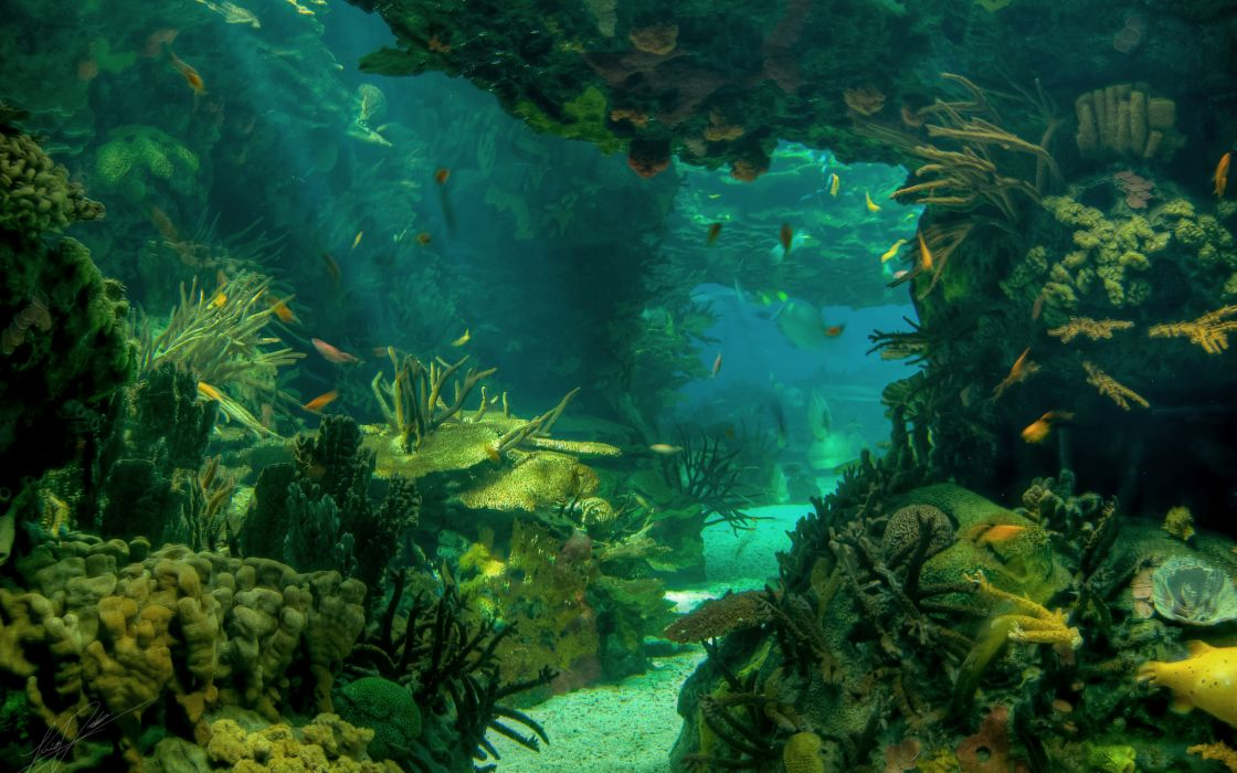 Sea Bottom Of The Sea Fish Seabed Sea: Sea Seabed Landscape Underwater Ocean Fish Wallpaper