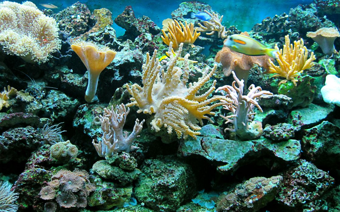 sea underwater ocean reef fish wallpaper