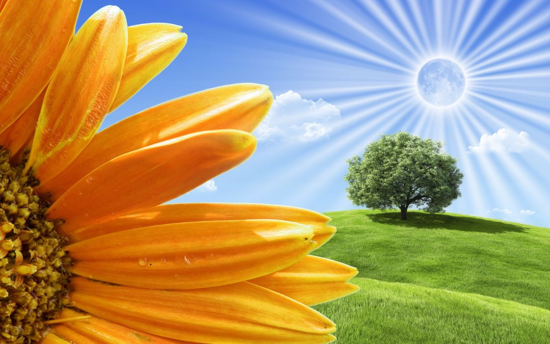 field tree flower wallpaper