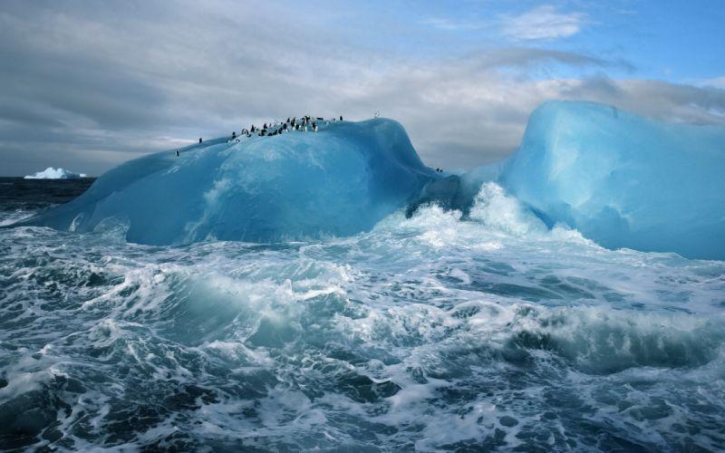 iceberg ice ocean sea waves birds penguins penguin wallpaper