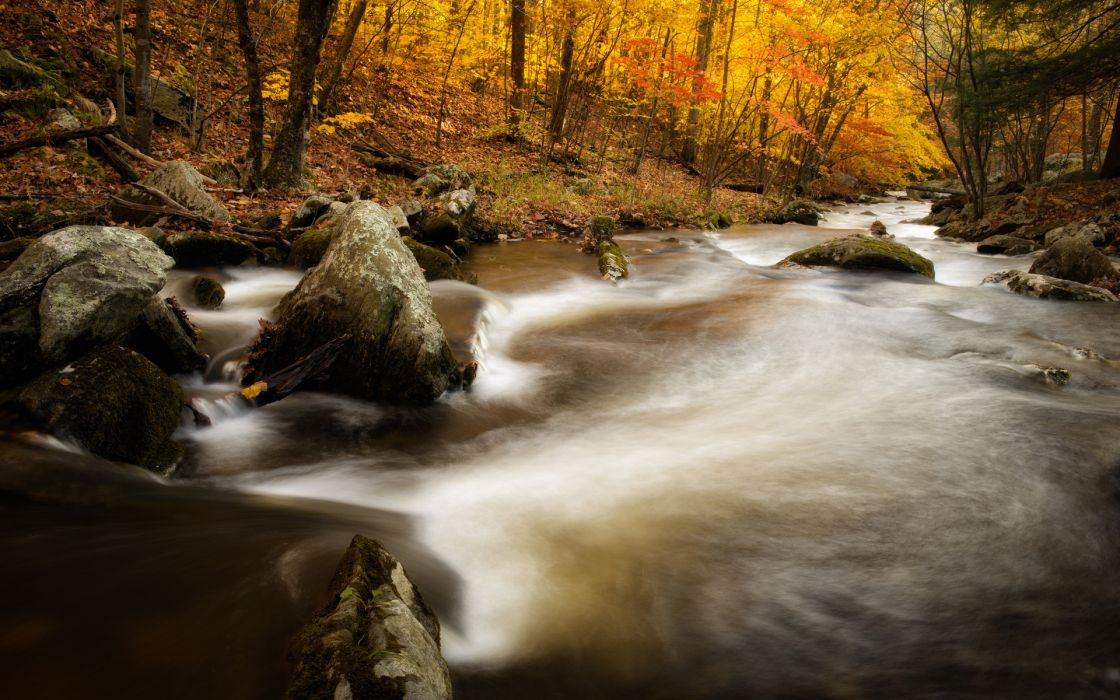 river stream trees forest autumn wallpaper