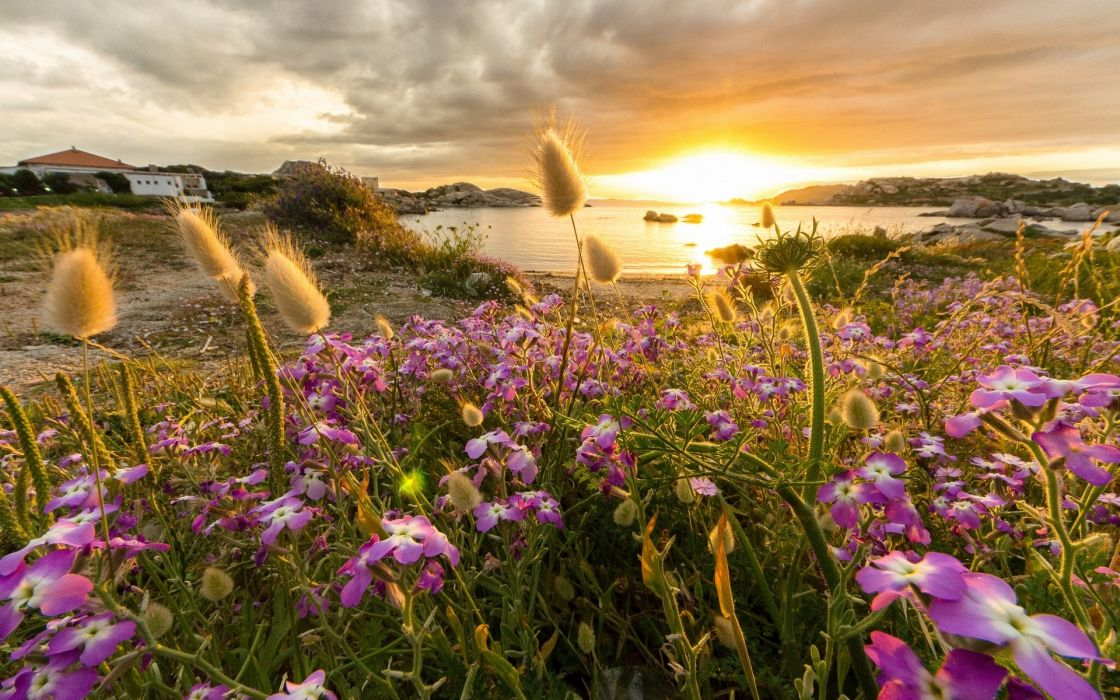 sunset flowers bay coast reflection wallpaper