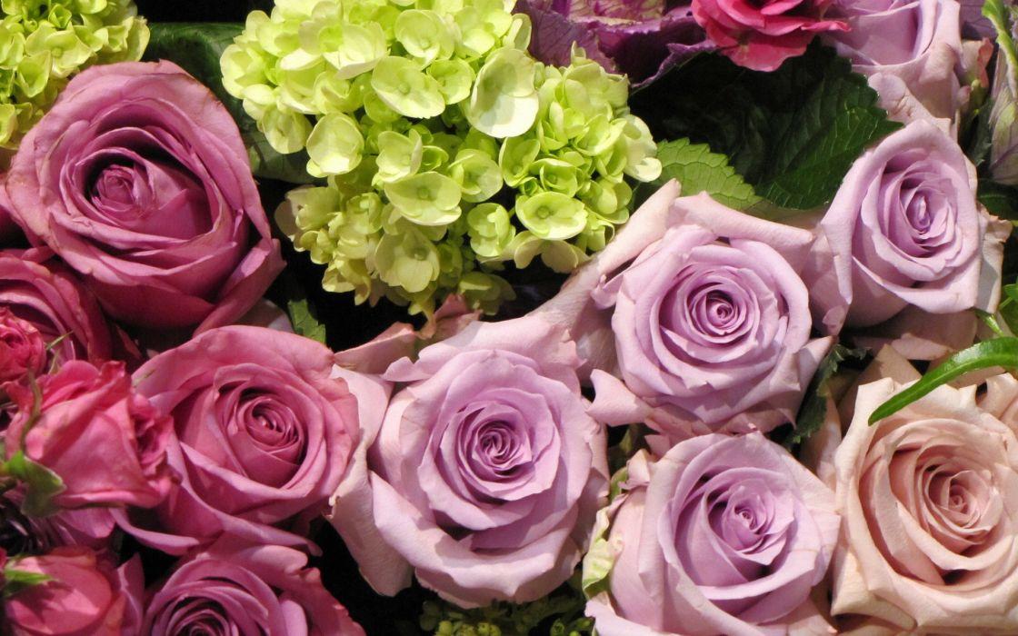 roses hydrangea buds blossoms wallpaper