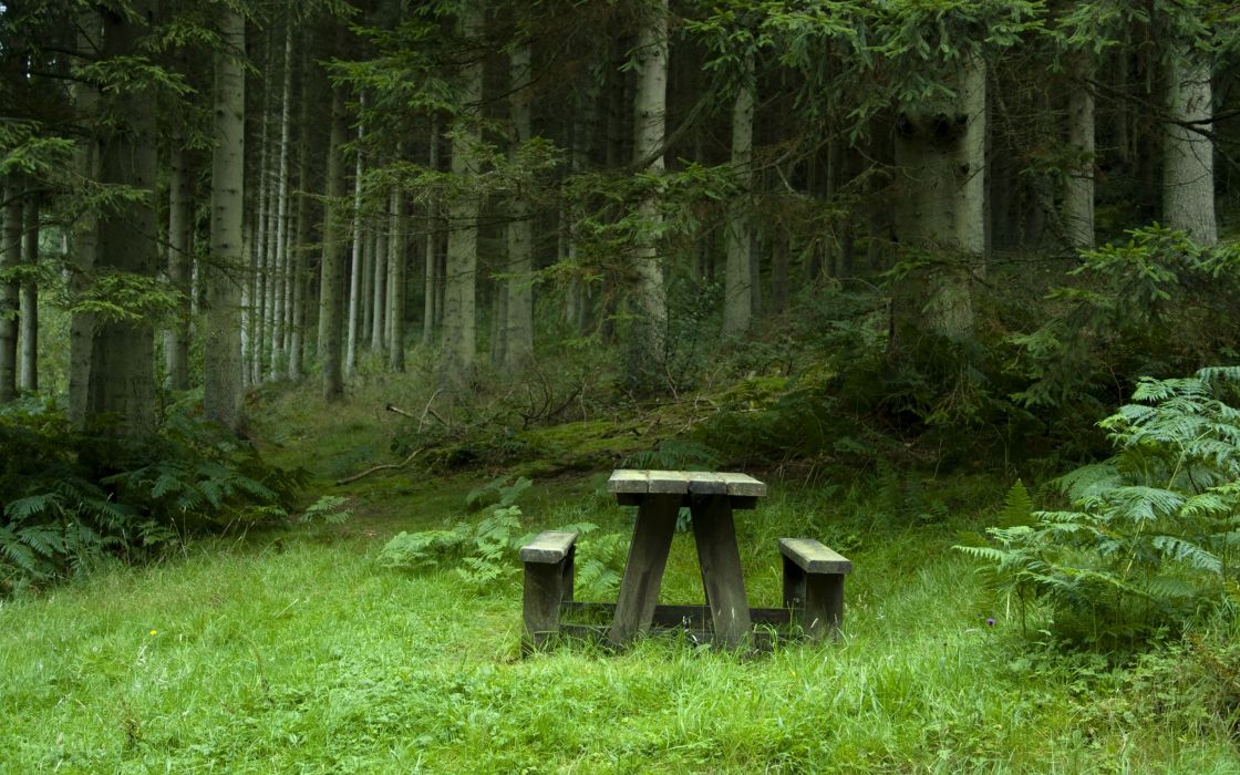 Bench Forest Trees wallpaper
