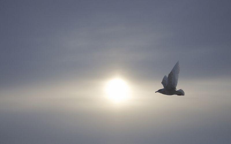 bird birds sky mood wallpaper