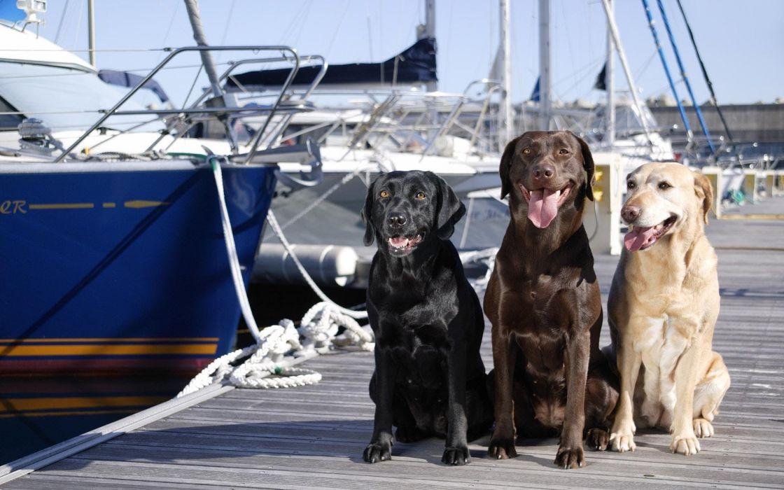 dog boat boats wallpaper