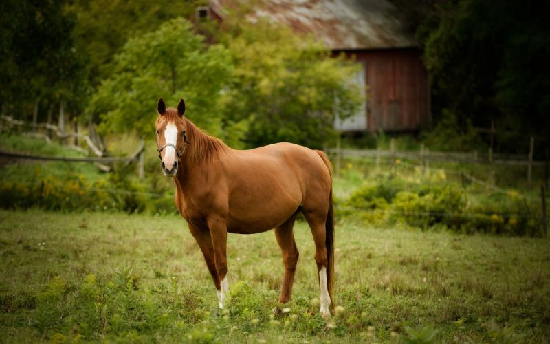 horse pasture horses wallpaper