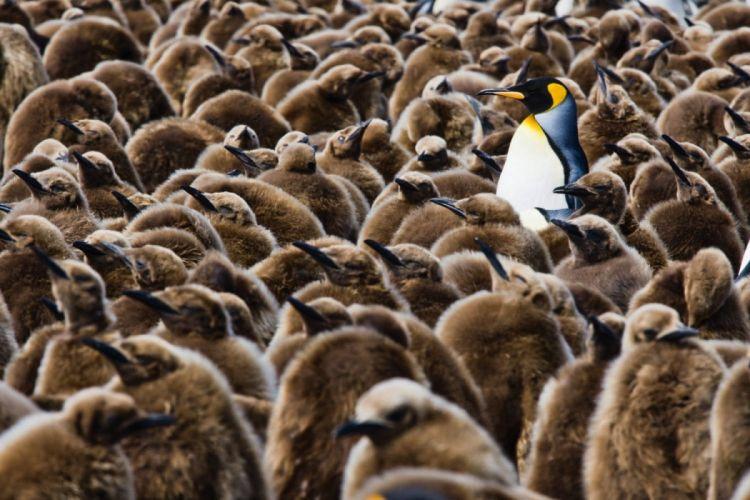 penguin penguins bird wallpaper