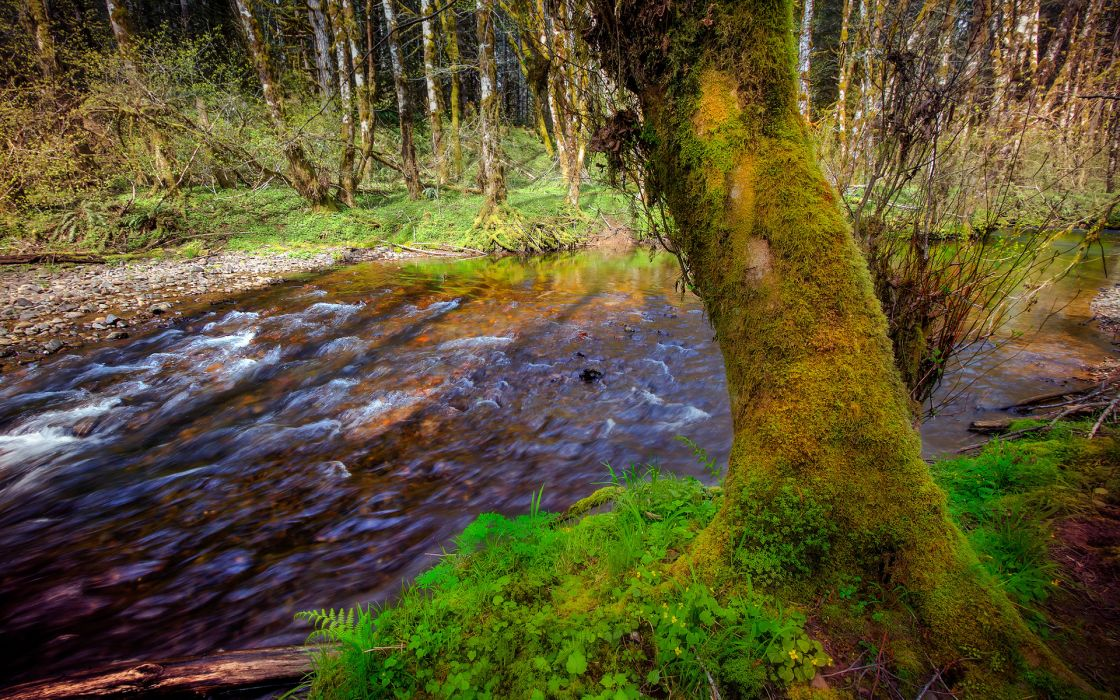 River Trees Moss Forest wallpaper