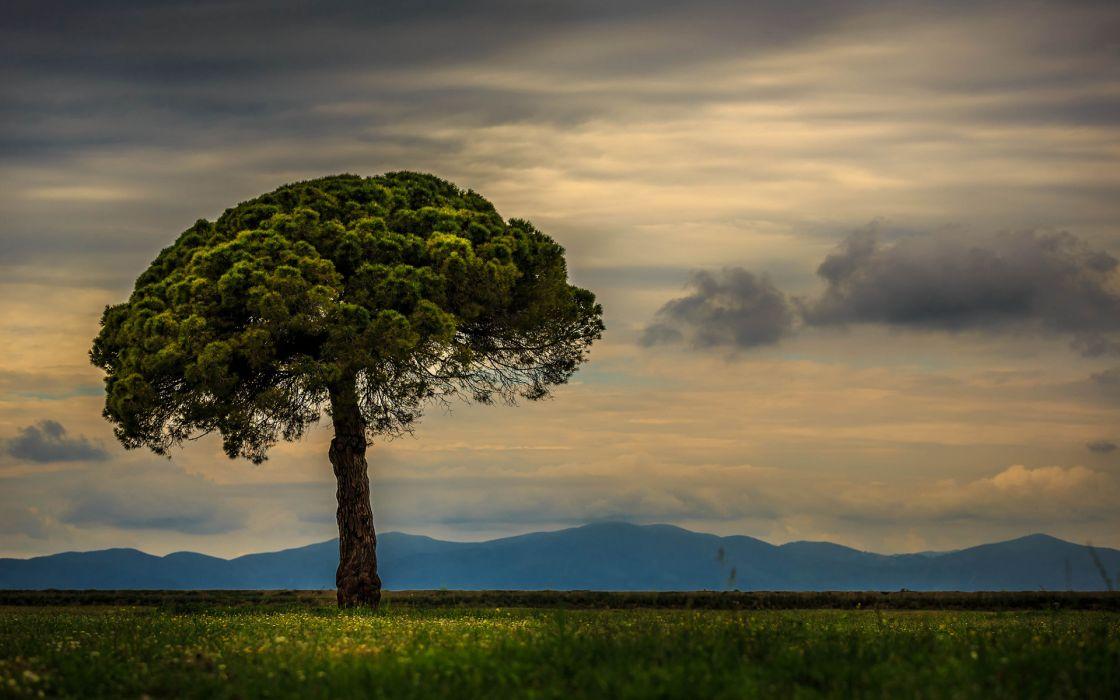 tree trees landscape wallpaper