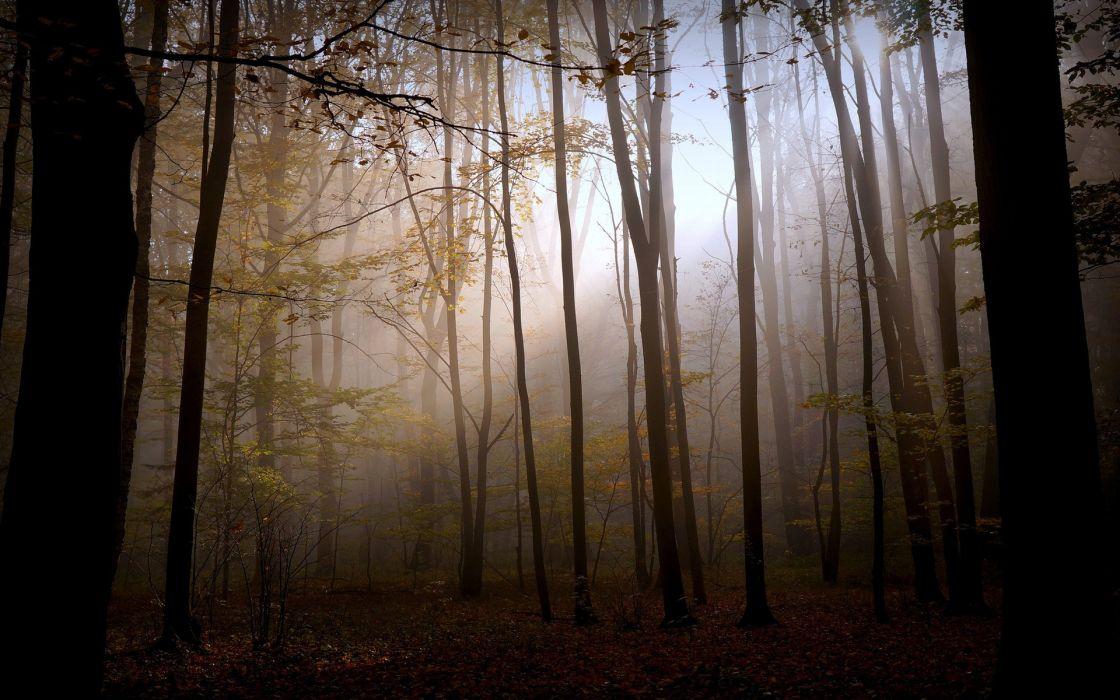Trees Sunlight Forest fog mood wallpaper