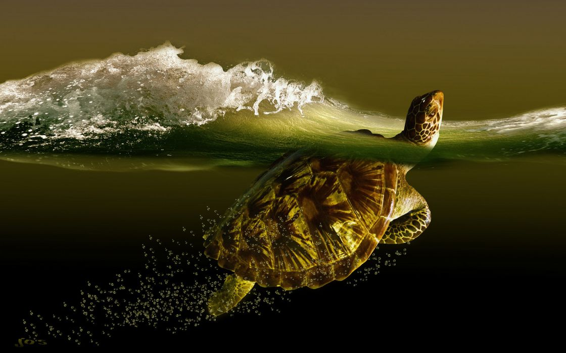 turtle sea wave turtles ocean waves bubbles underwater wallpaper