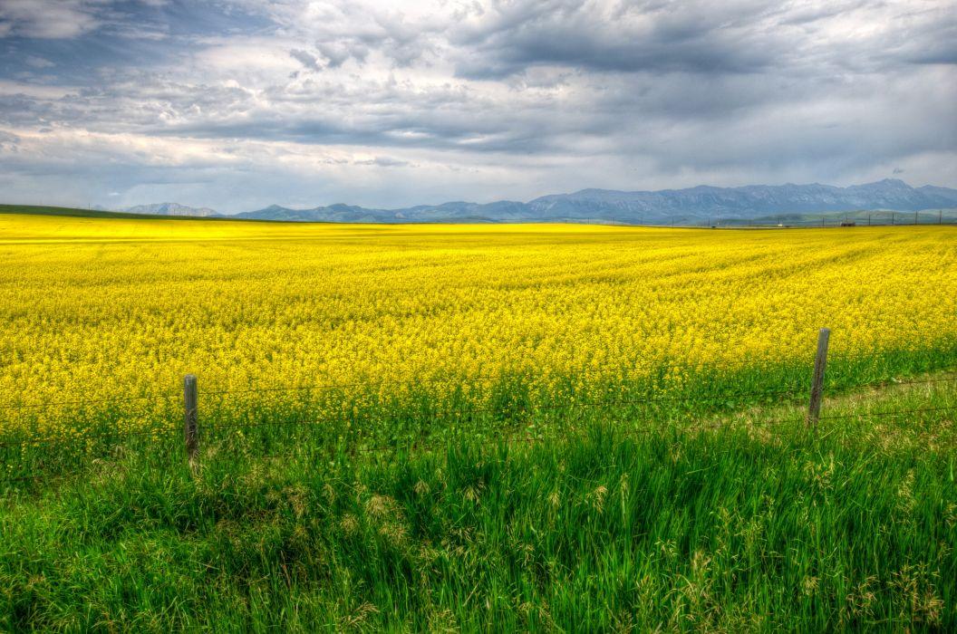 Fields Calgary Grass Yellow Fence Nature wallpaper